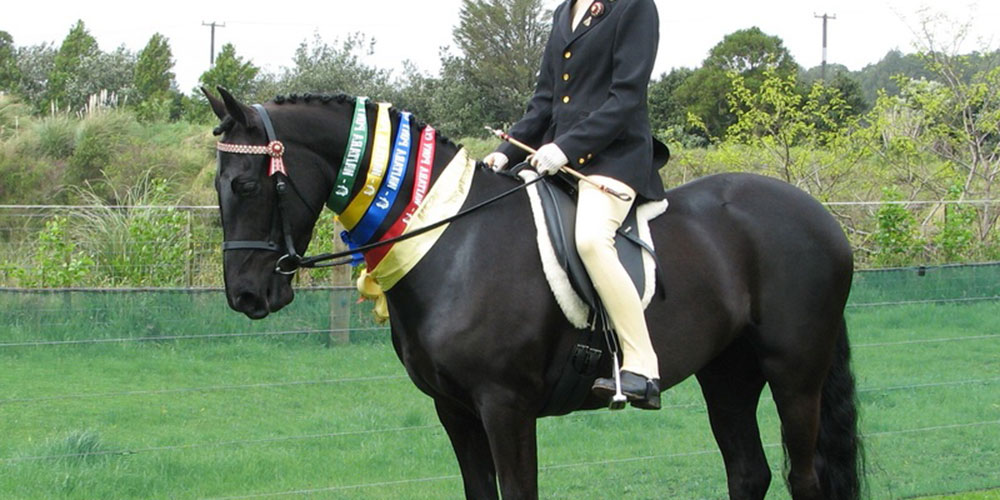 Ring Ribbons – Equestrian